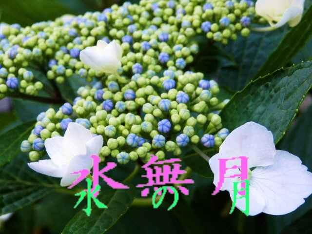 6月の花 (7)