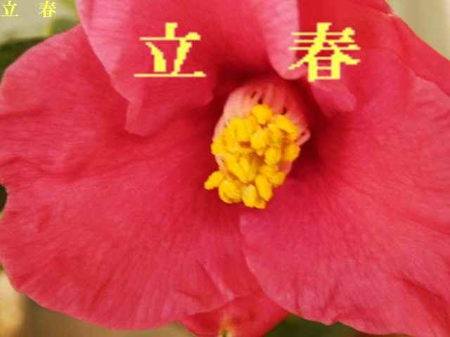 2月の花 - コピー
