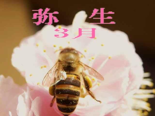 春・蜂が飛ぶ 001 - コピー